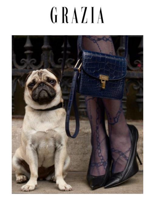 collier pour chien mag